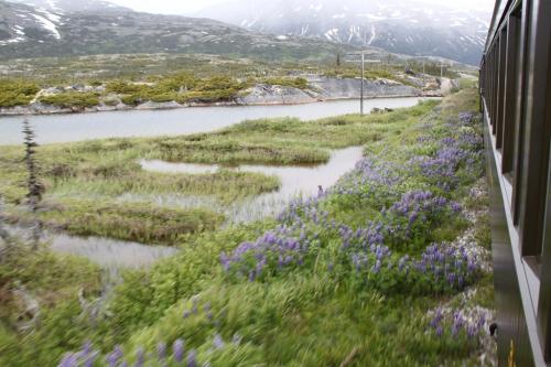 Alaskandream - railway panorama