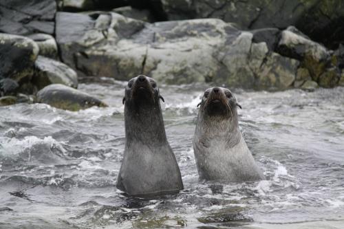 Antarctica - Award winning picture