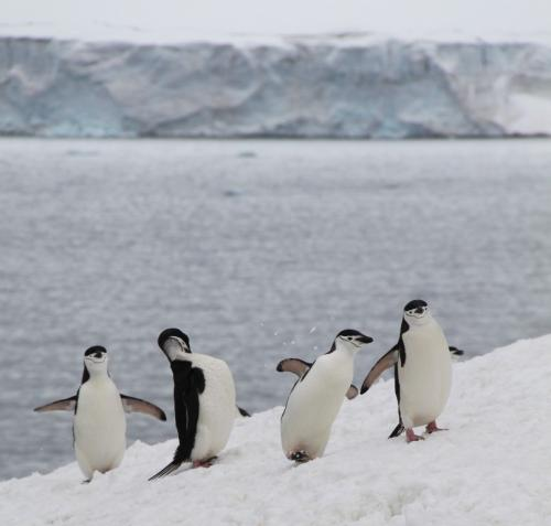 Antarctica - Happy feet