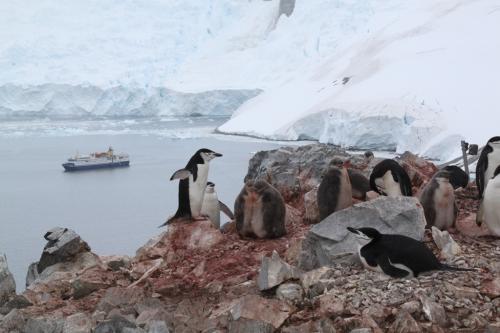 Antarctica - Mother Pinguin & Cubs