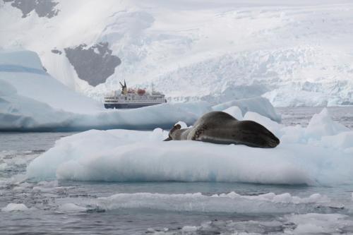 Antarctica - Schip met zeehond