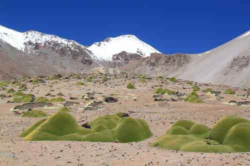 Atacama - Schoonmoeder pillow