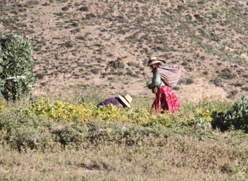 Atacama - Werkende vrouwen