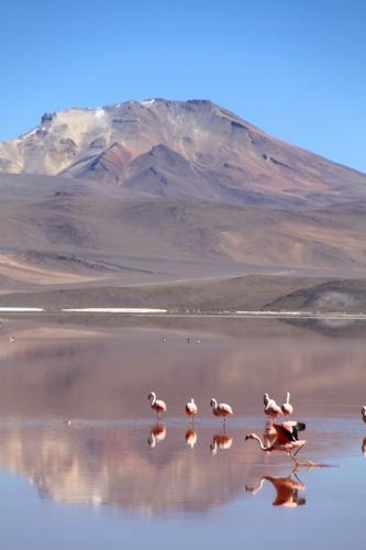 Bolivia - Flamingos (4)