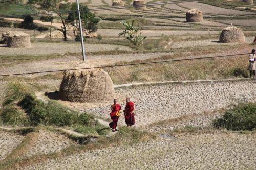 Buthan - Rice fields with monks
