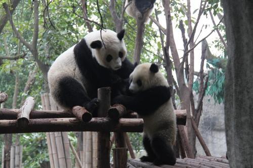 Chengdu - Mother & Child