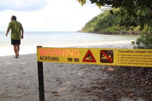 Daintree - warning croc