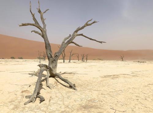 Deadvlei desert