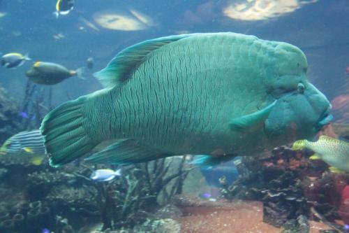 Dubai aqua fish