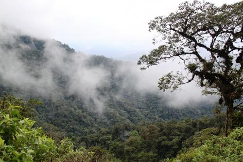 Ecuador - Rainforest wolken