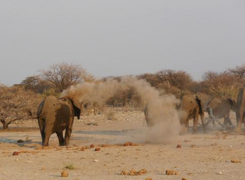 Eliphant and sand