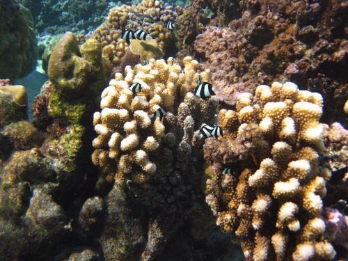 Frans Polynesie - Jardin coraille