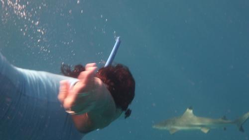 Frans Polynesie - de de en shark black point