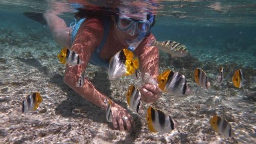 Frans Polynesie - fish feeding dede