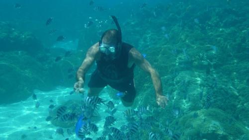 Frans Polynesie - fish feeding erwin