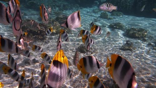 Frans Polynesie - koraal en vissen