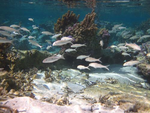 Frans Polynesie - koraal vissen