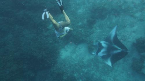Frans Polynesie -mantya rey ernesto