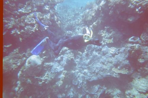 GBR - diving erwin