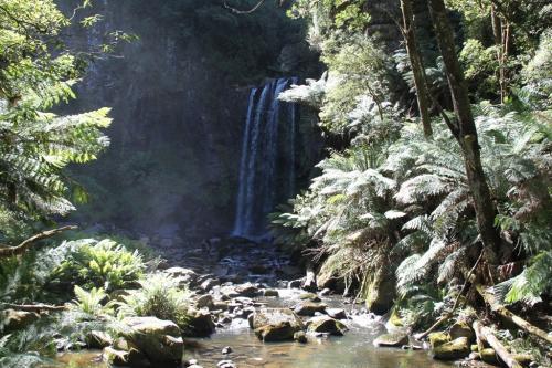 GOR - rainforest waterfalls