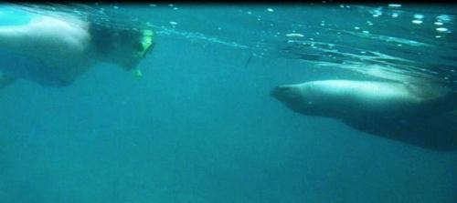 Galapagos - Dede neus aan neus met zeehond