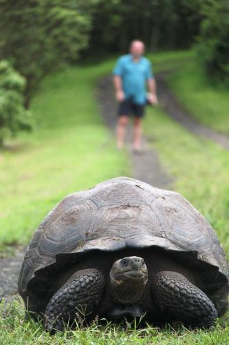 Galapagos - Reuze schildpad