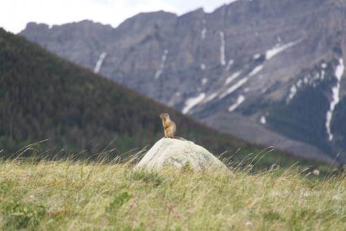 Glacier NP - squirrel