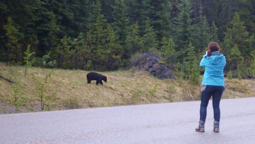 Jasper - dede en zwarte beer