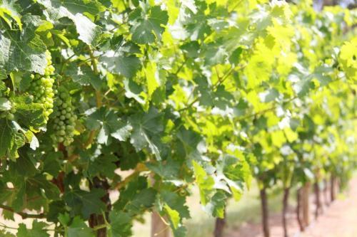 Magaret River winery