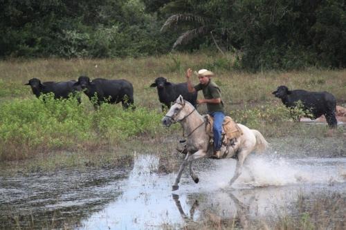 Mato Grosso - Cowboy