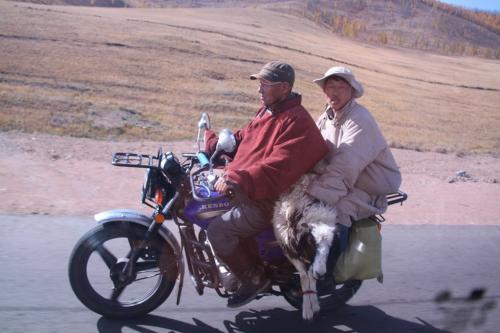Mongolia - Brommer met geit slachtbank