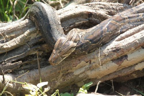 Nepal - Python