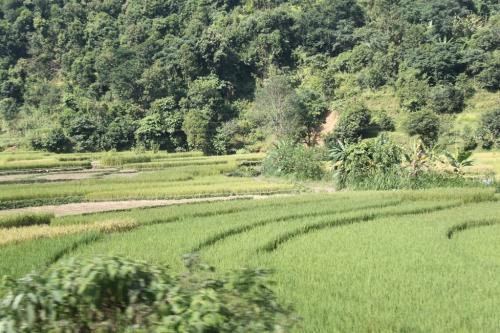 Nepal - Rijstvelden