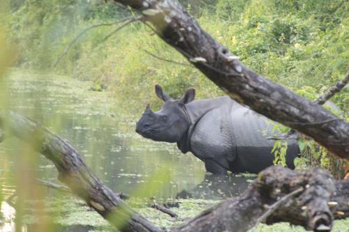 Nepal - Rivier met Rhino
