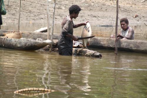 PNG - kuisen vis