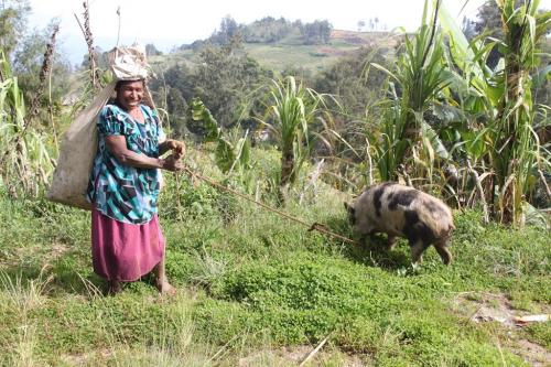PNG - woman and pig