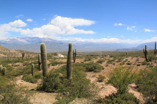 Salta - Cactuslandschap
