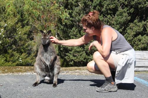 TAS-  kangooroe dede