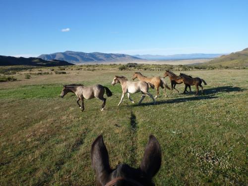 Tango - Running horses