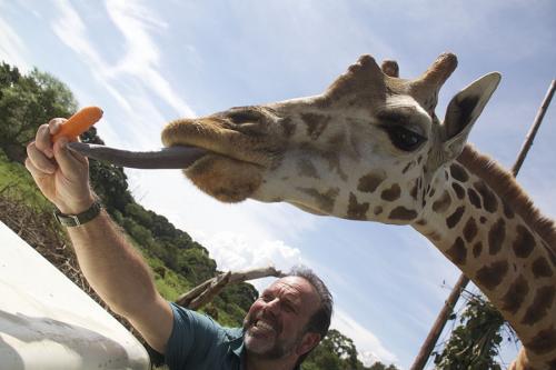 Tong Giraffe