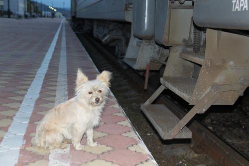 Trans Siberian - hond passagier