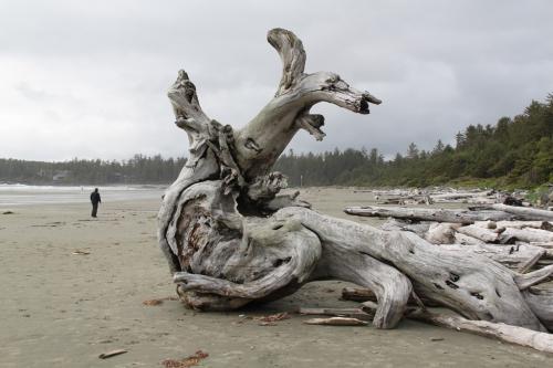 Vancouver Island - Tofino beaches