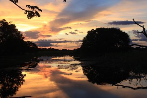 Wrap up - Pantanal sunset