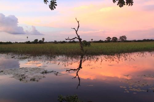 Wrap up - Pantanal wet season