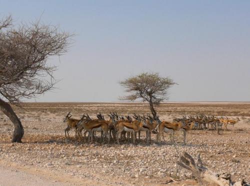 springboks in high alert
